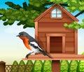 A bird at the pethouse