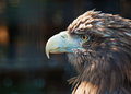 Bird of prey Stock Images