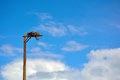 Bird of Prey Hawk's Falcon's Erected Man Made Nest on a Pole Royalty Free Stock Photo