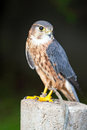 Bird of prey photo a Stock Photos