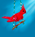 Bird red Funny Royalty Free Stock Photo