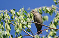 Bird resting on a branch in tree Royalty Free Stock Image