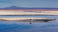 Bird resting on a lake s edge in atacama desert Stock Photography