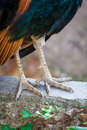 Bird s legs the close up Stock Images