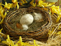 Bird's Nest Royalty Free Stock Images