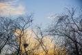 Bird s nest and bird in the tree sunset blue sky Royalty Free Stock Photos