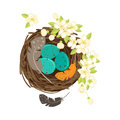 Bird`s nest with eggs and flowering branches.