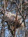Bird's nest Royalty Free Stock Photo