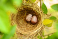 Bird s nest on a tree Stock Photo