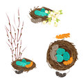 Bird`s nests with eggs set