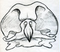 Bird scull sketched hand drawn pencil sketch of a big Stock Photos