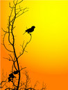Bird Silhouette Royalty Free Stock Photos