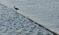 Bird silhouette standing on poles water dike of a wooden in the middle of a pond Royalty Free Stock Photo