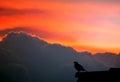 Bird singing Royalty Free Stock Photo