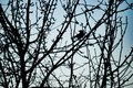 A bird sits on a tree, silhouette