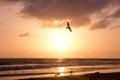 Bird Soars during Golden Sunset over Ocean Royalty Free Stock Photo