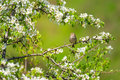 Bird on spring Royalty Free Stock Photo