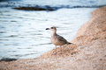 Bird standing on shore Royalty Free Stock Photo