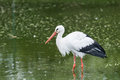 Bird standing in water big mouth a zoo Royalty Free Stock Image