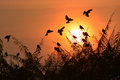 Bird sunset silhouette on background Royalty Free Stock Images