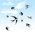 Bird swallow in blue sky vector seamless horizontal illustration poses Royalty Free Stock Photo