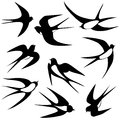 Bird swallow set vector illustration poses isolated on white Stock Images