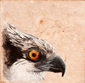 Bird tile. Royalty Free Stock Image