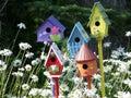 Bird Town Stock Image