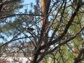 stock image of  Bird in Tree