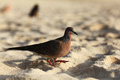 Bird walking along the beach exotic hunting Royalty Free Stock Images