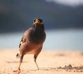 Bird walking on sandy beach tropical Royalty Free Stock Photos