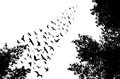 Bird wedge and trees silhouettes on white background