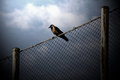Bird on wire Stock Image