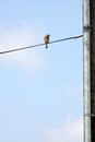 This is a bird on a wire Stock Photo