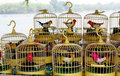 Birdcages Royalty Free Stock Photography