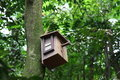 Birdhouse with bird inside Royalty Free Stock Images