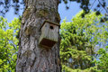 Birdhouse da floresta Imagem de Stock Royalty Free