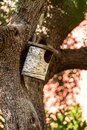 Birdhouse made with a birch trunk Royalty Free Stock Photo