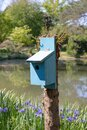 Birdhouse painted blue on a sprouting tree stump, rustic lake and Siberian iris, bluebird house Royalty Free Stock Photo