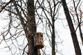 A birdhouse on the tree. A homemade birdhouse made by schoolchil Royalty Free Stock Photo