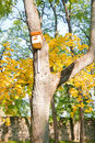 Birdhouse on a tree wooden in the autumn park Royalty Free Stock Image