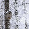 Birdhouse at winter wooden hanging on the tree Royalty Free Stock Photos