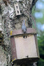 Birdhouse with young bird Royalty Free Stock Photography