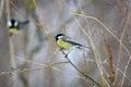 Birdie bird birds hummingbird white flying Stock Images