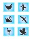 Birds Royalty Free Stock Photo