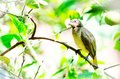 Birds alive alone animal avian beak beautiful bird birdie birding Stock Image