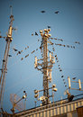 Birds around telecommunication tower Stock Images