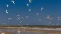 Birds at the Beach Royalty Free Stock Photo