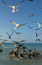 Birds on the beach of Holbox Royalty Free Stock Photo