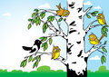 Birds on a birch in the illustration the background forest and blue sky sitting tree it s sparrows and magpies illustration Royalty Free Stock Image
